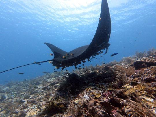 Dive+精彩瞬间,一起体验Scuba Diving运动