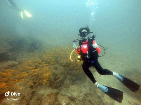 Dive+热门主题:#最美潜水照