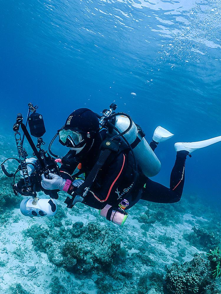 Dive+领路人xxnoo5zotrpgcoma6dfhmo7x1风采