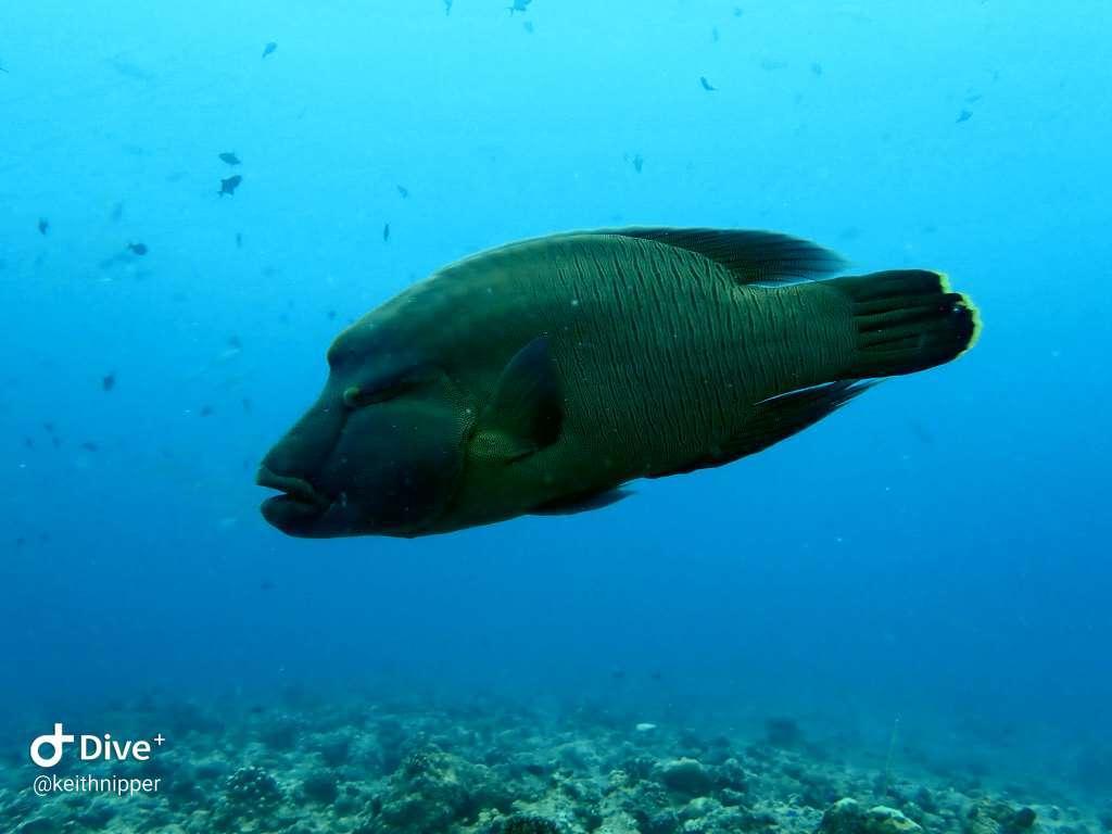 Dive+潜水员keithnipper的精彩瞬间
