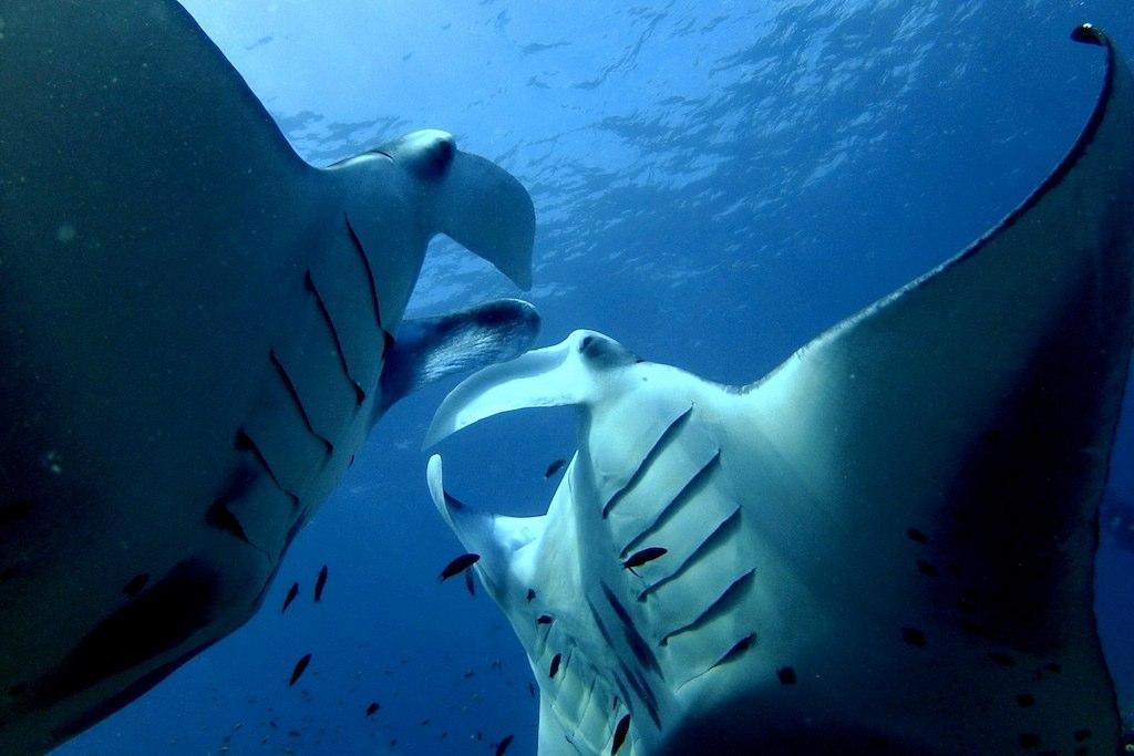 Dive+带您出游,历览世界各地