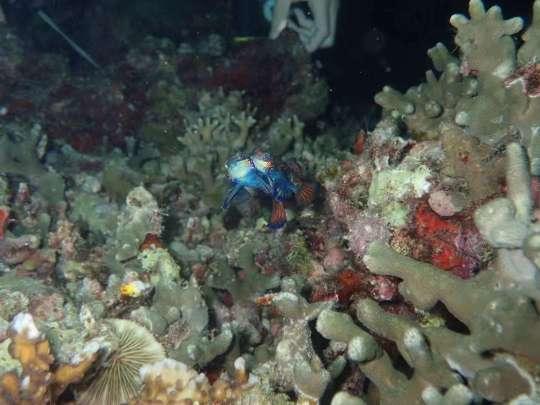 Dive+精彩瞬间,一起体验在Zhejiang的潜水