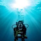Dive+潜水员bonieboy