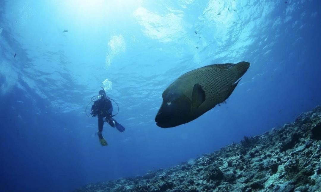 Dive+行程集,为您推荐实惠、经济、安全、好玩的潜水之旅