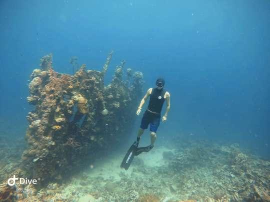 Dive+精彩瞬间,一起体验在Coron的潜水