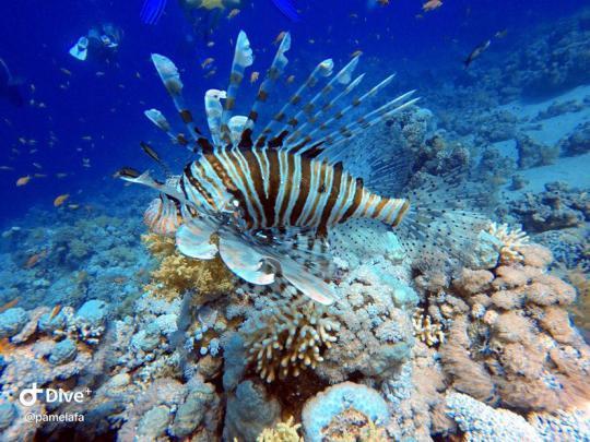 Dive+精彩瞬间,一起体验在Azzate的潜水