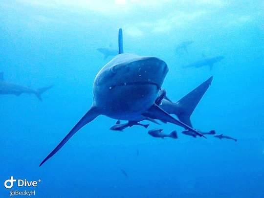 Dive+精彩瞬间,一起体验在KwaZulu-Natal的潜水