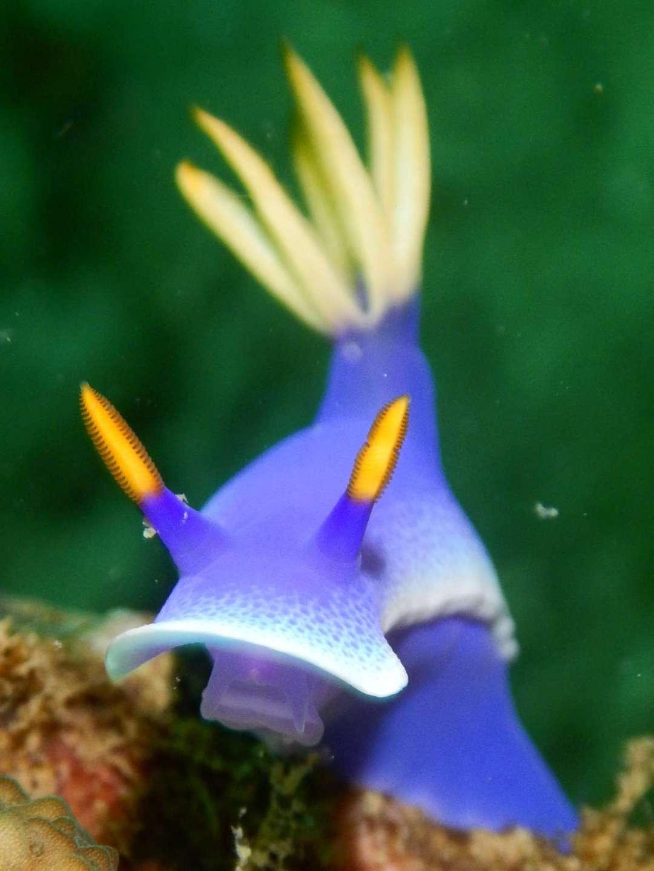 Dive+潜水员muchlisfish的精彩瞬间