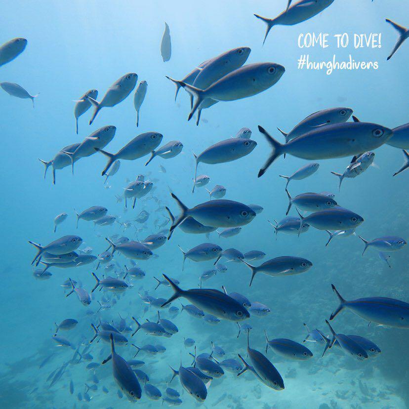 Dive+潜水员hurghadivers的精彩瞬间