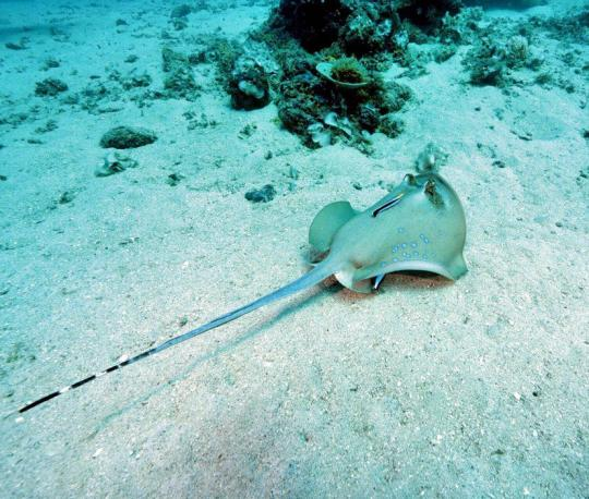 Dive+精彩瞬间,一起体验在West Nusa Tenggara的潜水