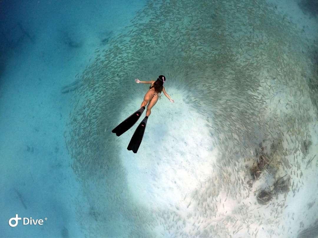 Dive+潜水员satine的精彩瞬间