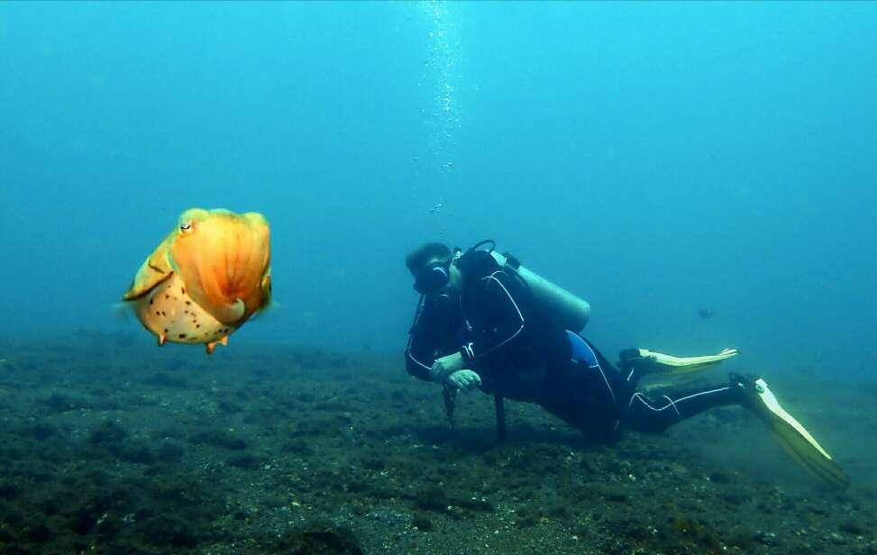 Dive+潜水员Putra的精彩瞬间