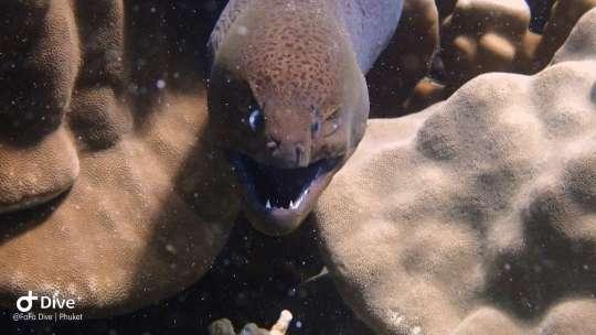 Dive+精彩瞬间,一起体验在Pa Tong的潜水