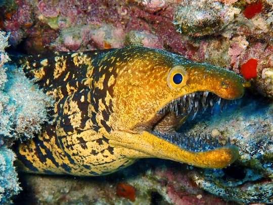 Dive+精彩瞬间,一起体验在Montaña Roja的潜水