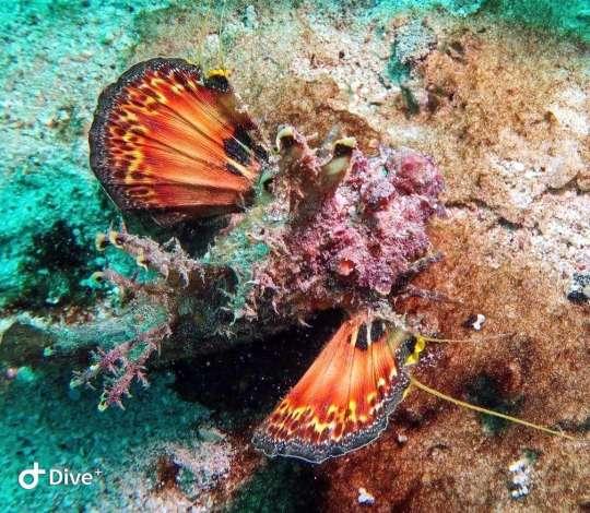 Dive+精彩瞬间,一起体验在Red Sea Governorate的潜水