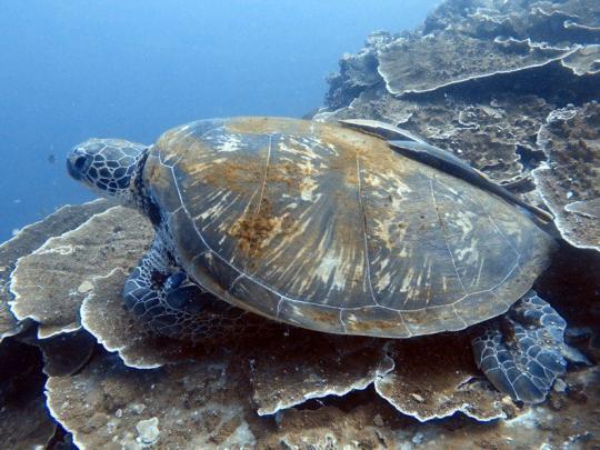 Dive+精彩瞬间,一起体验在Rawai的潜水
