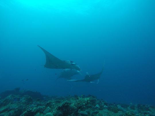 Dive+精彩瞬间,一起体验在Maldives的潜水