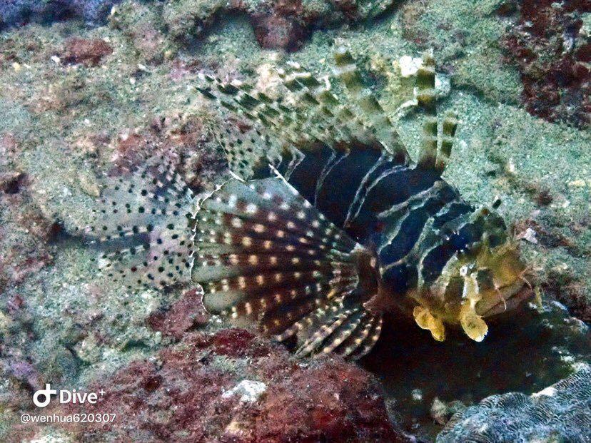 Dive+潜水员wenhua620307的精彩瞬间