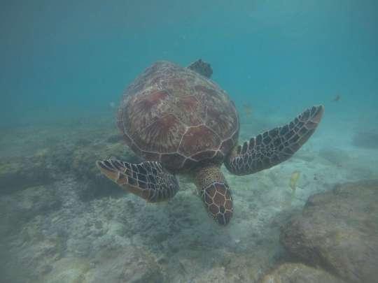 Dive+精彩瞬间,一起体验在Dauin的潜水