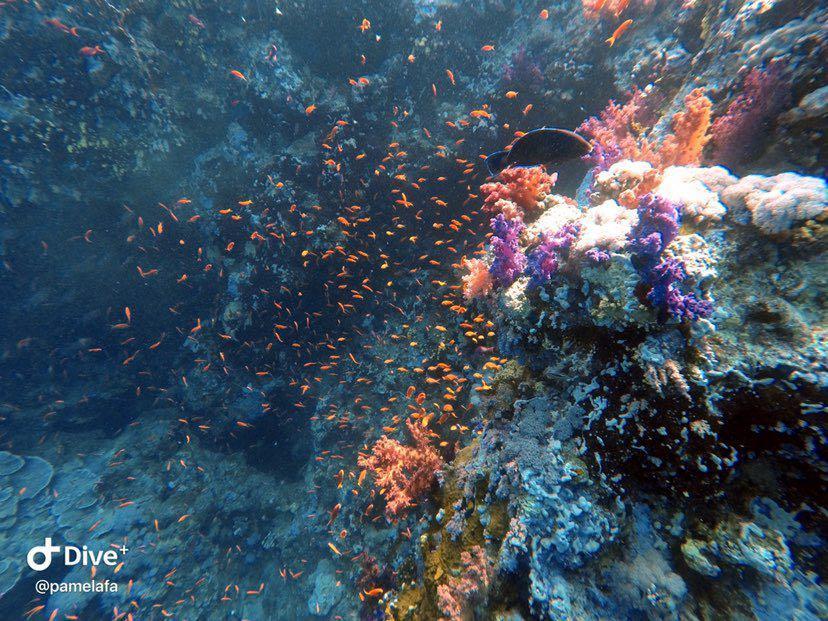 Dive+潜水员pamelafa的精彩瞬间