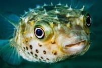 Dive+潜水员islandive5