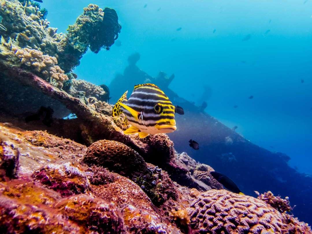 Dive+潜水员AeonMantis的精彩瞬间