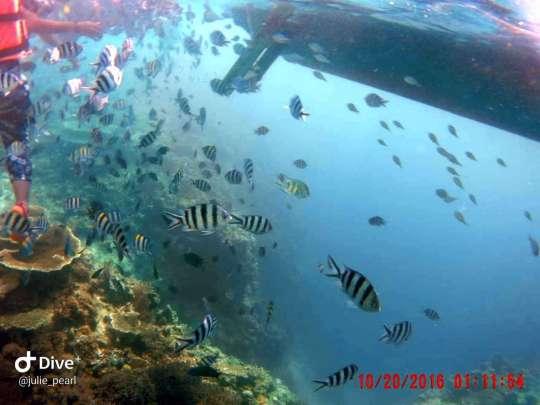 Dive+精彩瞬间,一起体验在Philippines的潜水