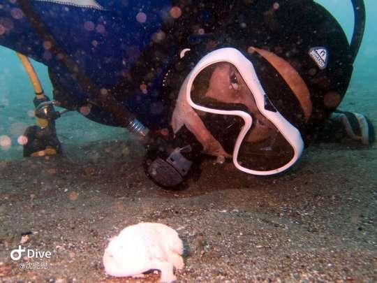 Dive+精彩瞬间,一起体验在Anilao的潜水