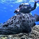 Dive+潜水员ginakwan