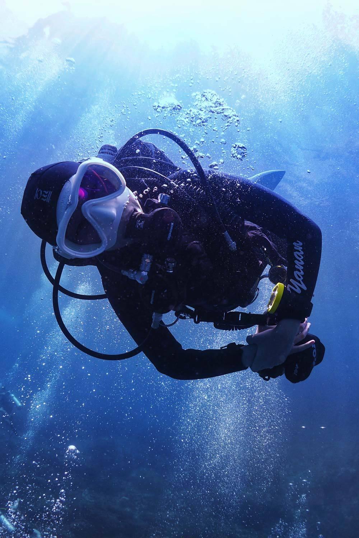 Dive+领路人经历