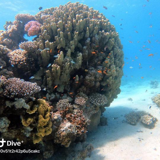 Dive+精彩瞬间,一起体验在Eilat的潜水