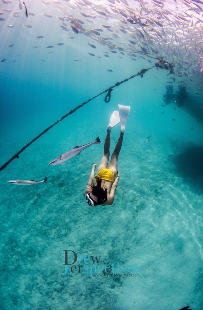 Dive+潜水员xian0308的精彩瞬间