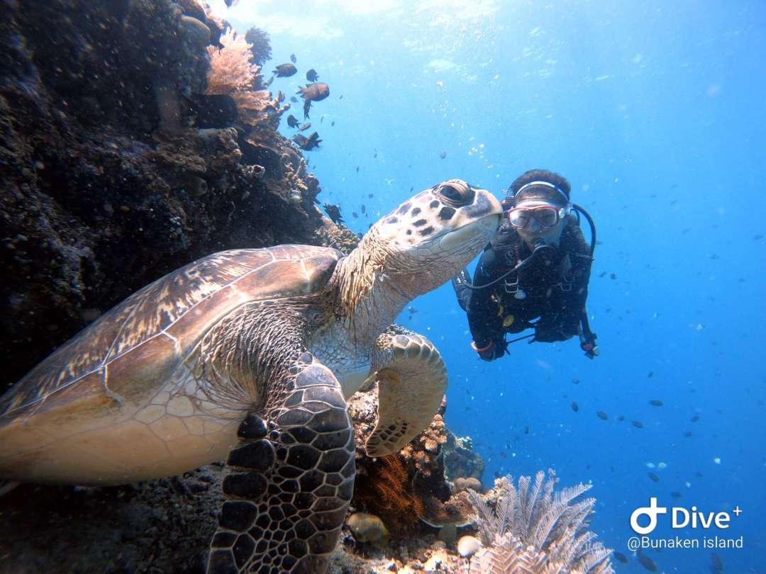 Dive+潜水员Jackydiver的精彩瞬间