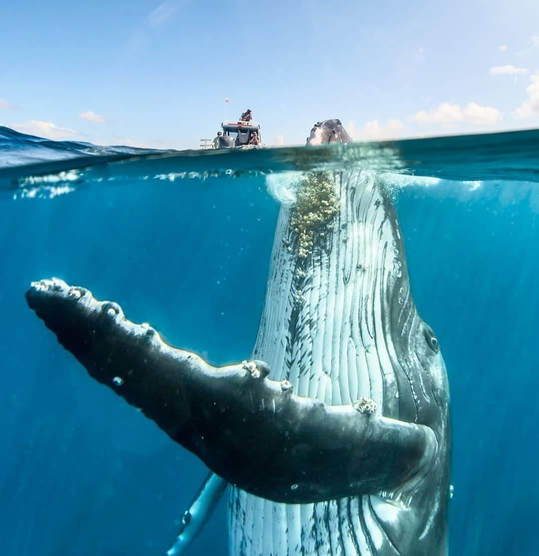 Dive+潜水员murphy的精彩瞬间