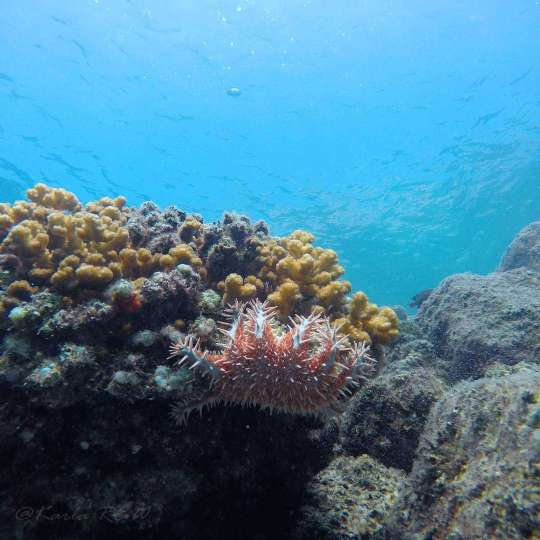 Dive+精彩瞬间,一起体验Tech Diving运动