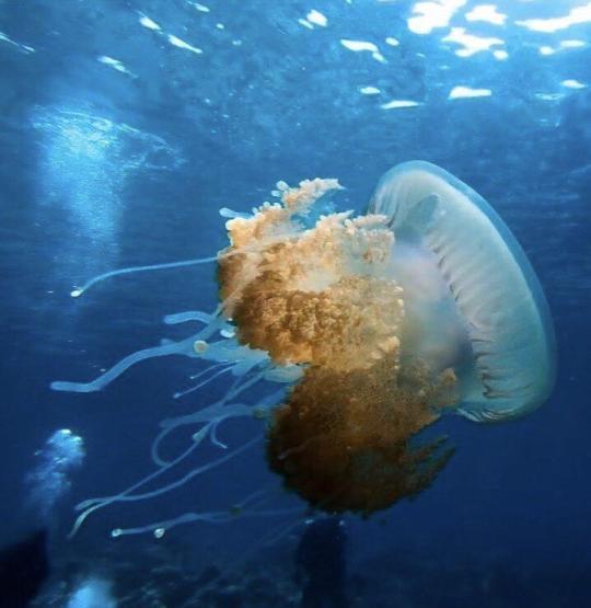 Dive+精彩瞬间,一起体验在North Central Province的潜水