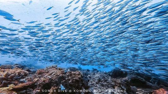 Dive+精彩瞬间,一起体验在East Nusa Tenggara的潜水