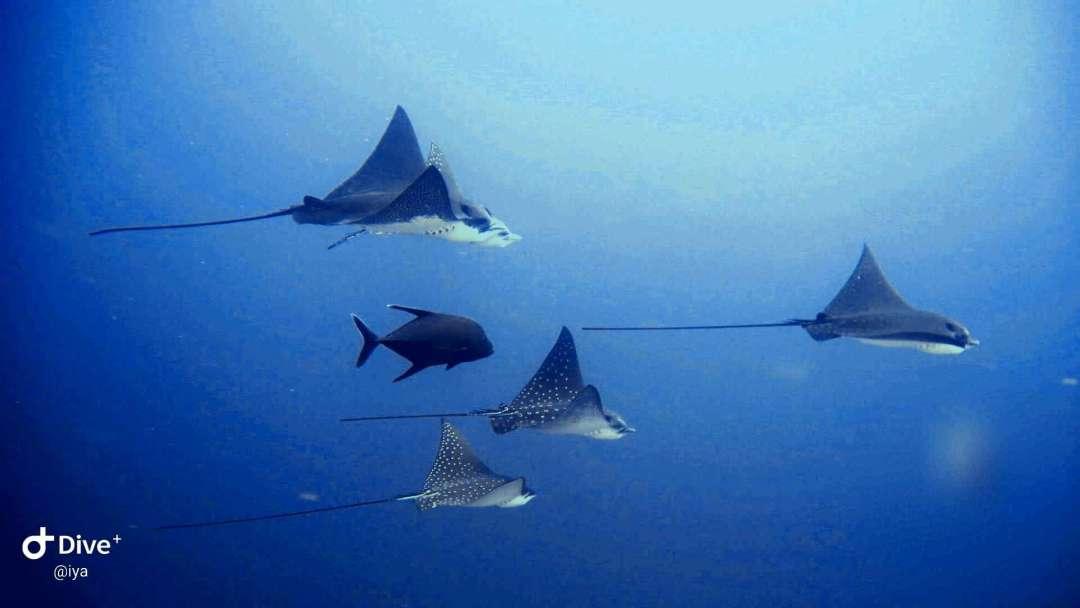 Dive+潜水员iyaas的精彩瞬间