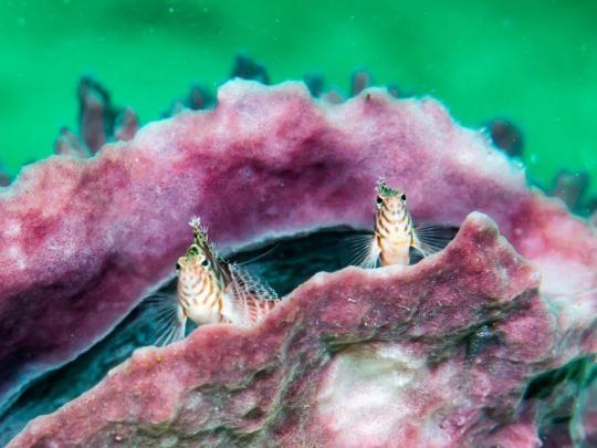 Dive+精彩瞬间,一起体验在Semporna的潜水