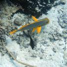 Dive+潜水员ChengY