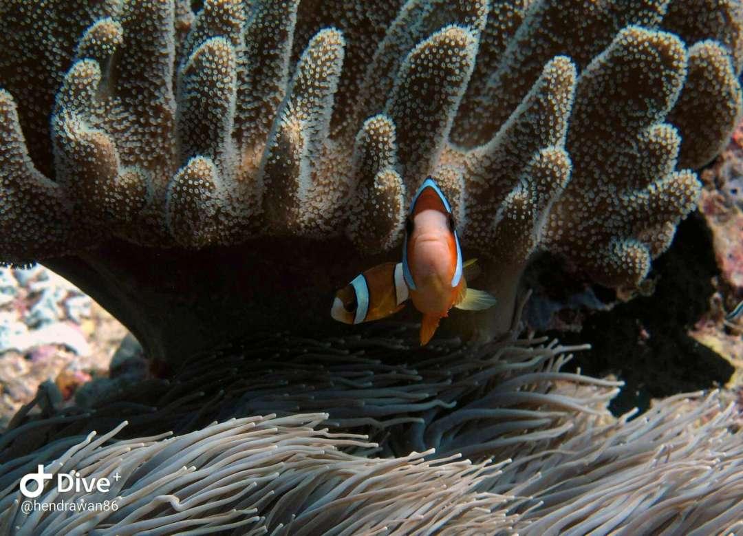 Dive+潜水员hendrawan86的精彩瞬间
