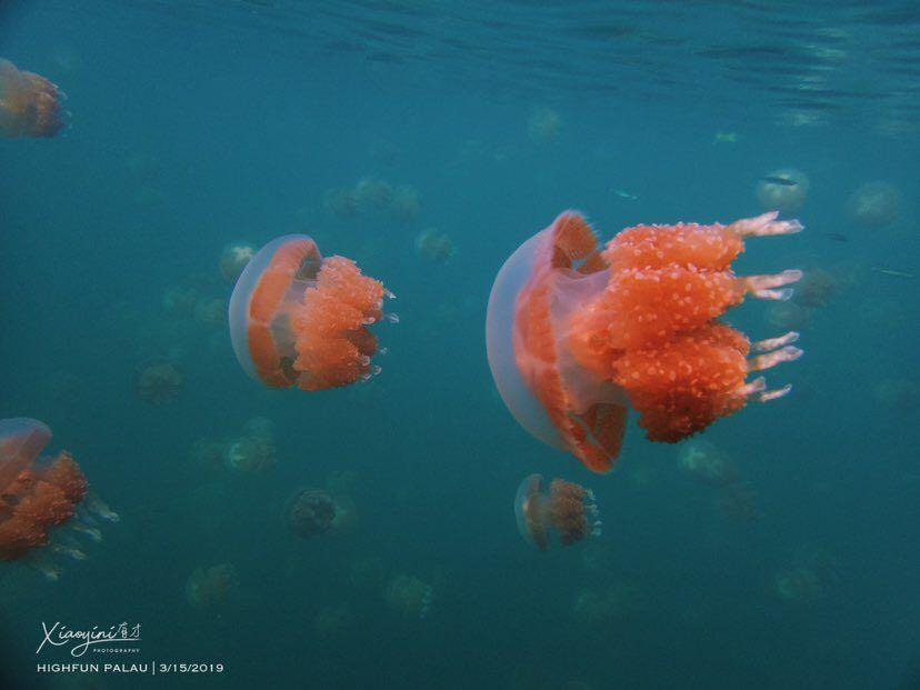 Dive+潜水员xiaoyini的精彩瞬间