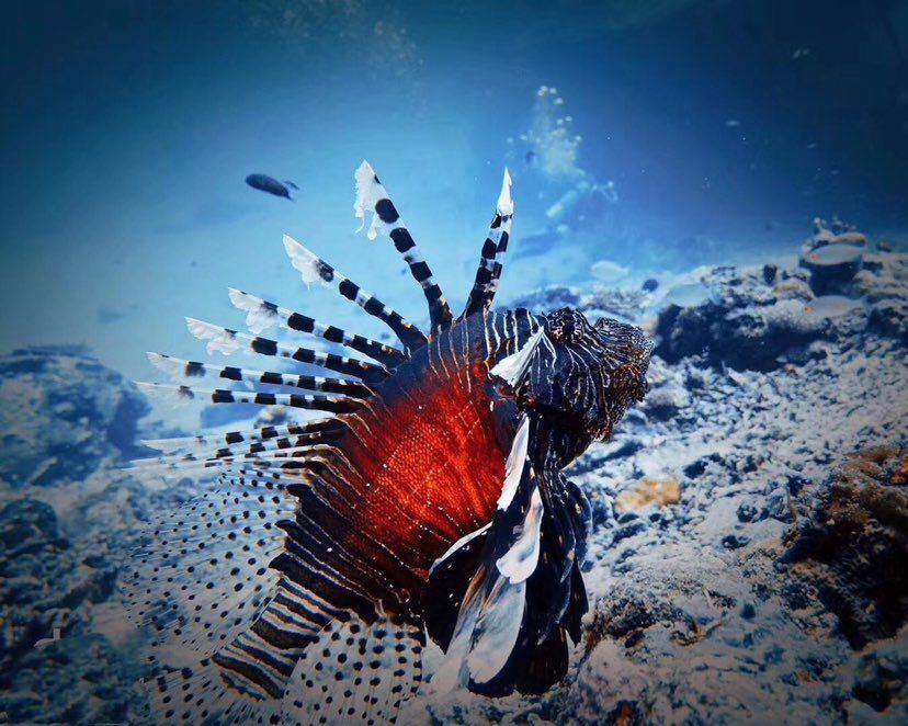 Dive+潜水员frekxeya的精彩瞬间