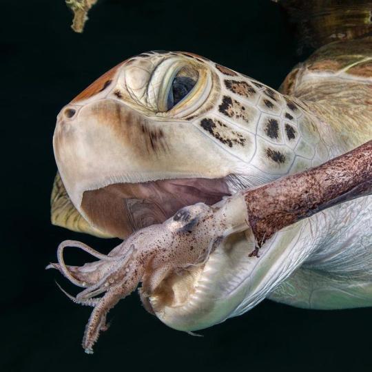 Dive+热门主题:#海龟