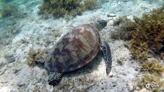 Dive+精彩瞬间,一起体验Snorkeling运动