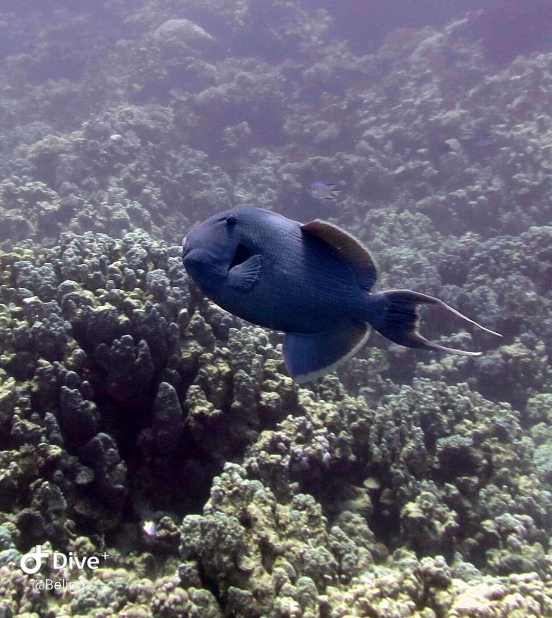 Dive+潜水员p1xuzf5b5n47c2ik447zlko6z的精彩瞬间