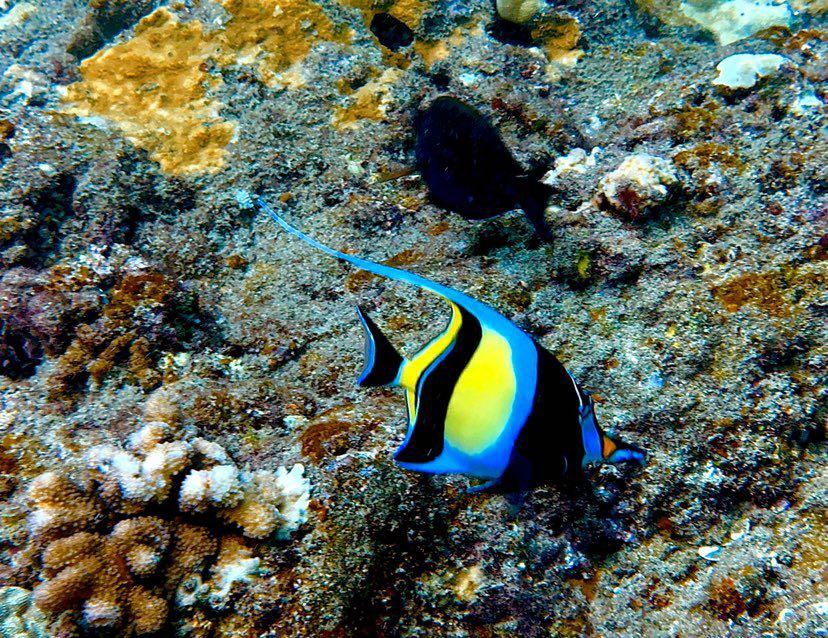 Dive+潜水员MikeOYang的精彩瞬间