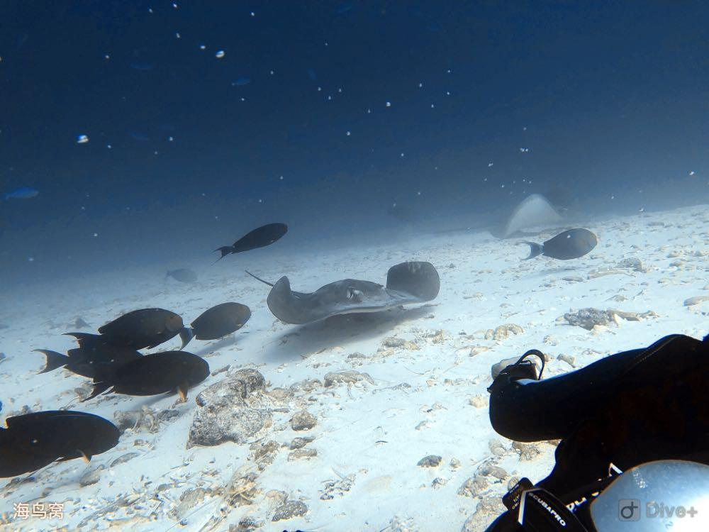 Dive+潜水员passdoka的精彩瞬间
