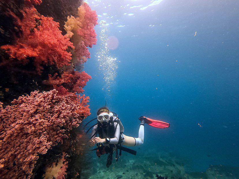 Dive+潜水员sunnie777的精彩瞬间