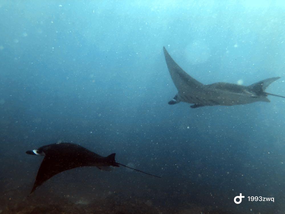 Dive+潜水员1993zwq的精彩瞬间